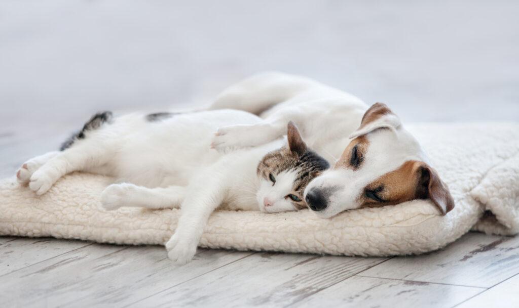 hund og kat hygger sammen