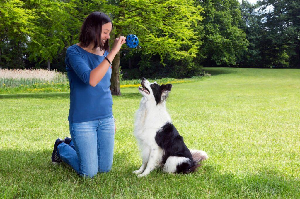 hunden apportieren beibringen