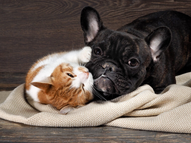 hund og kat leger sammen
