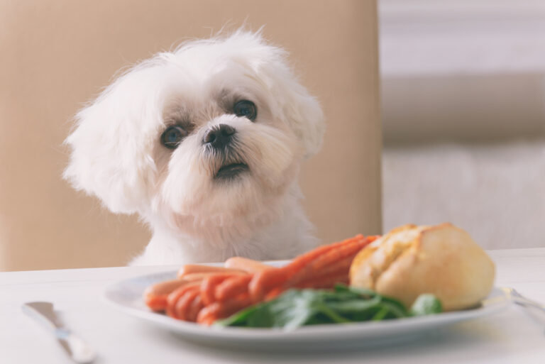 hvilke fødevarer er dårlige for hunde