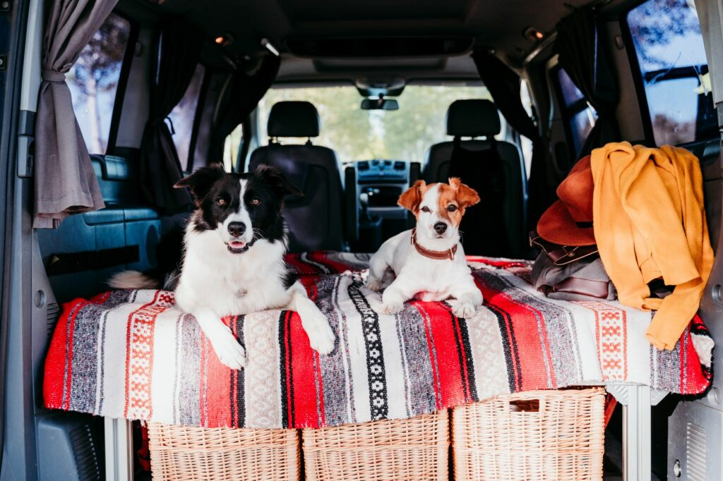 border collie jack russell campervan