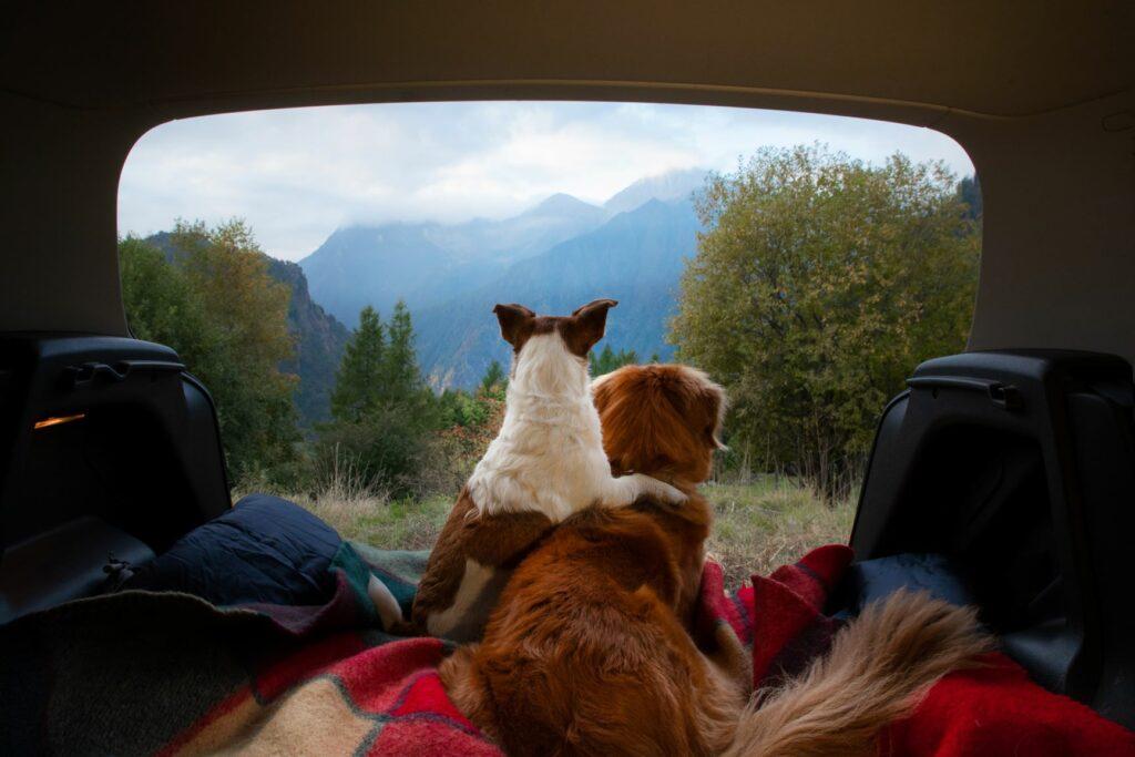 zwei hunde machen camping