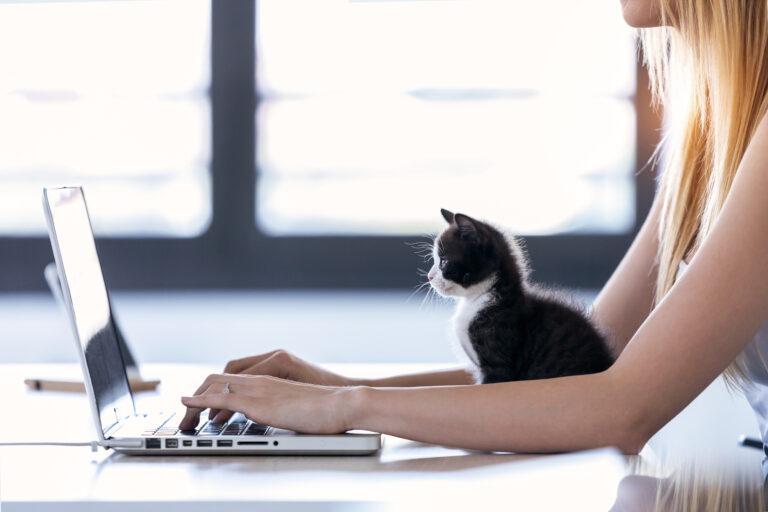 Arbejde hjemmefra med kat