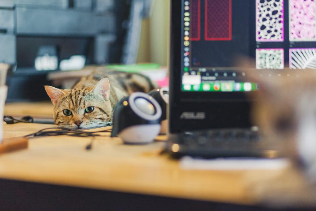 Hjemmearbejde med kat