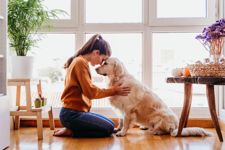 Hundeluftning under karantæne