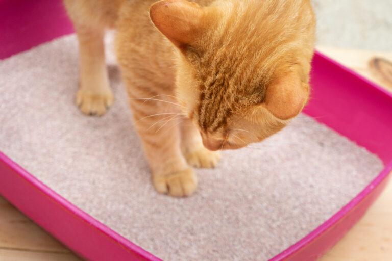 kattebakke eller kattetoilet med hus til katten