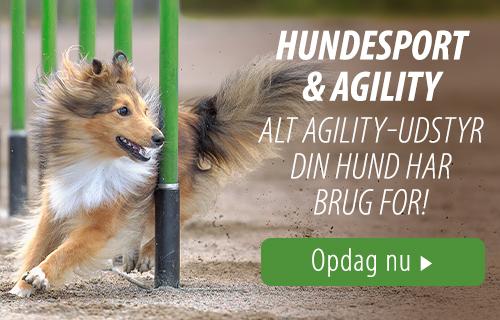 Hundesport og agility udstyr