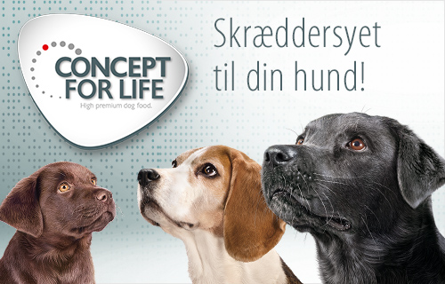 Concept For Life Hund