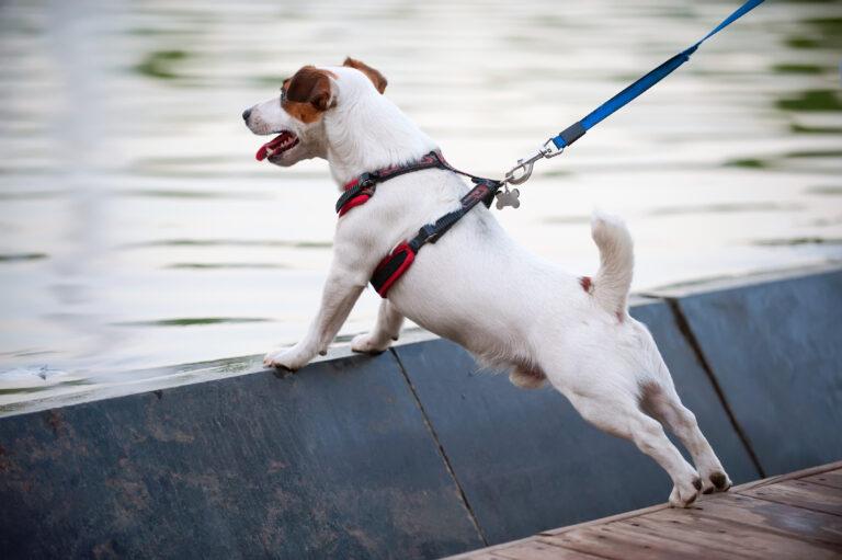 hundesele eller hundehalsbånd