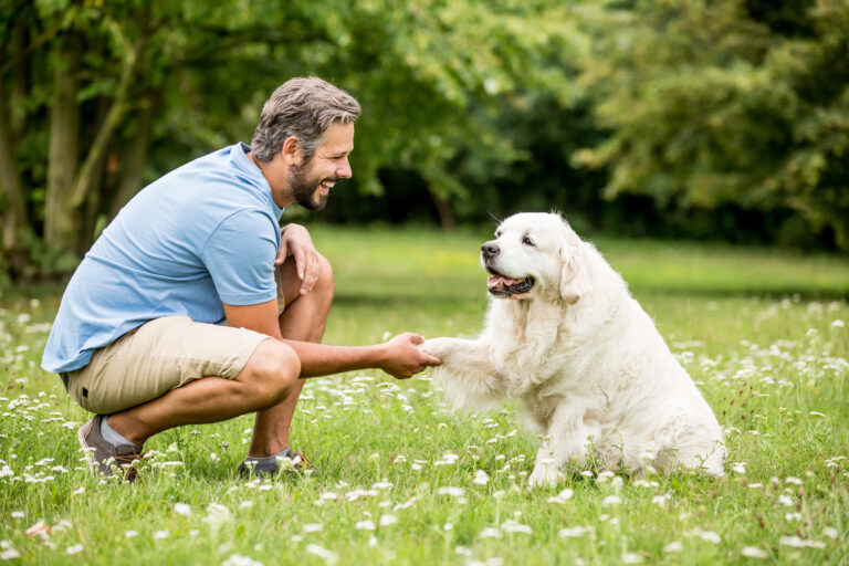 hundetræner med golden retriever
