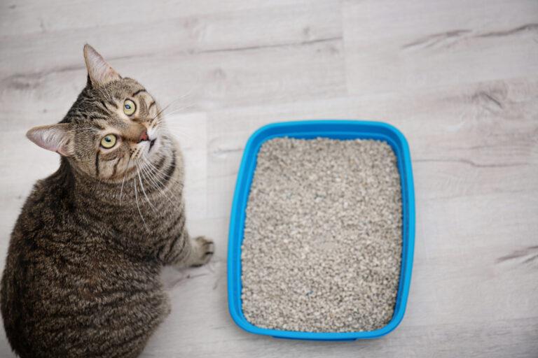 forskellige slags kattegrus sammenlignes