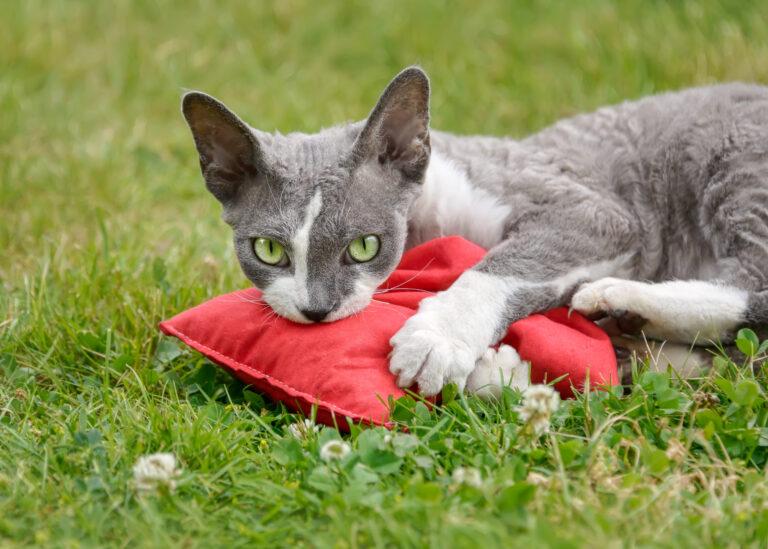 kat leger med baldrianpude