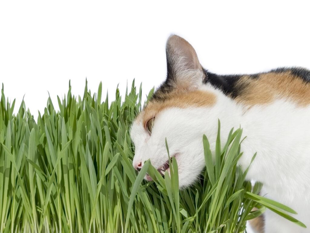 kat med baldrian