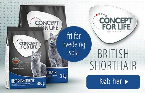 Concept for Life British Shorthair Kat