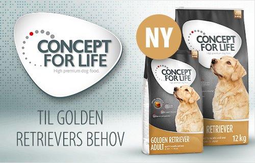 Concept For Life Golden Retriever Hund