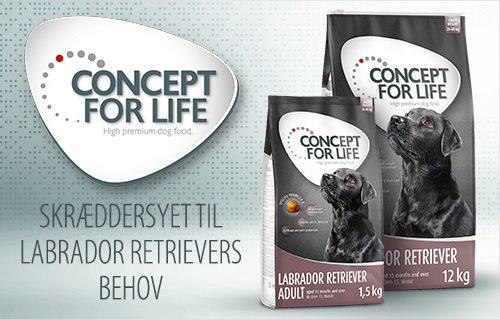 Concept for Life Labrador Retriever Hund