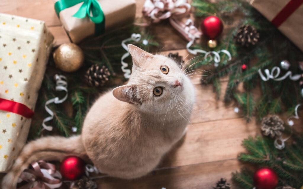 en kat i julegave?