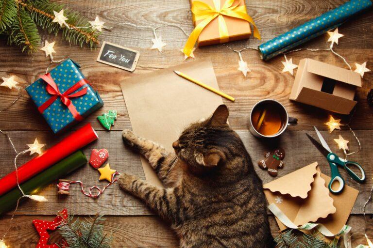 DIY pakkekalender til kat