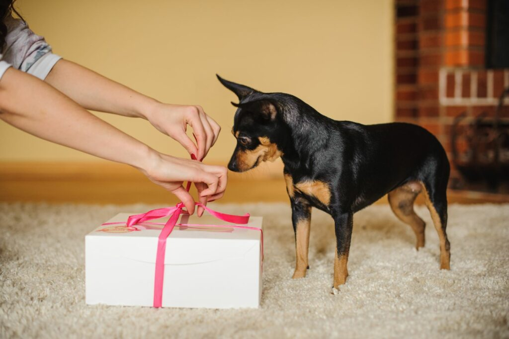 Hund får sin valentinsgave