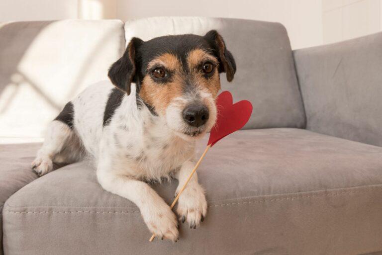 Hund med valentinshjerte