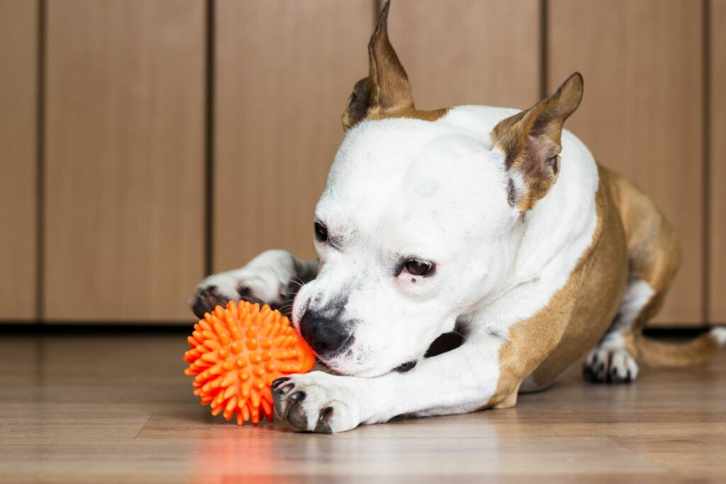 Hund bider i en bold