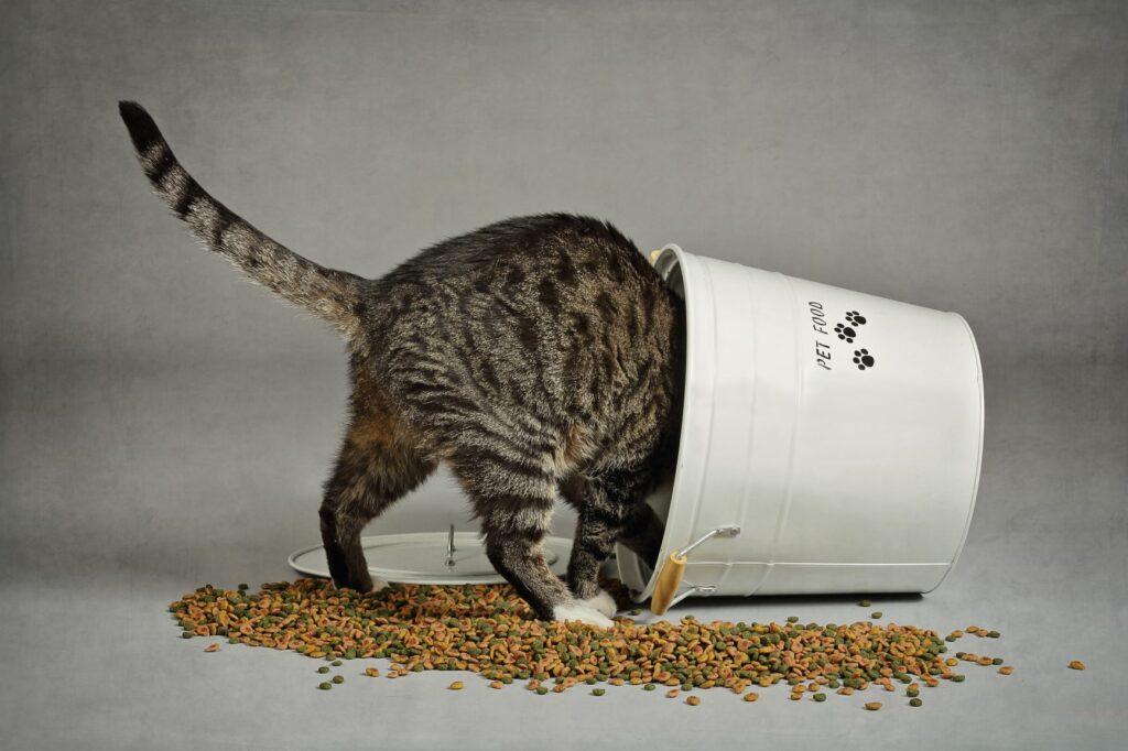 Kat vælter beholder med tørfoder