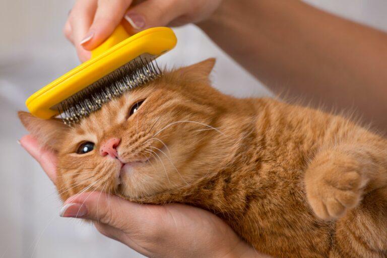 Kat bliver børstet