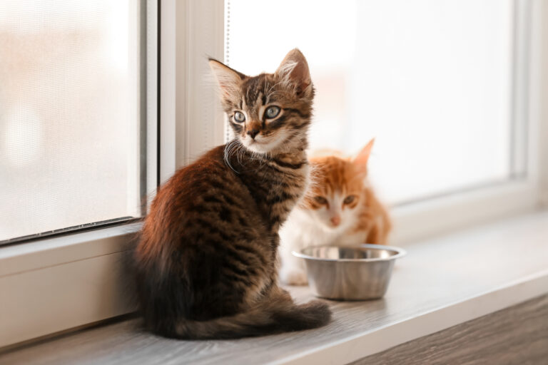 Det rigtige kattefoder til katte i alle aldre