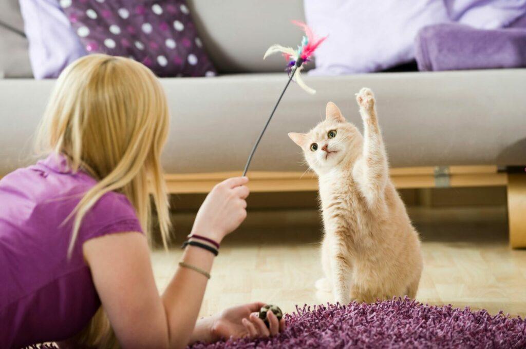 Katten som rollemodel